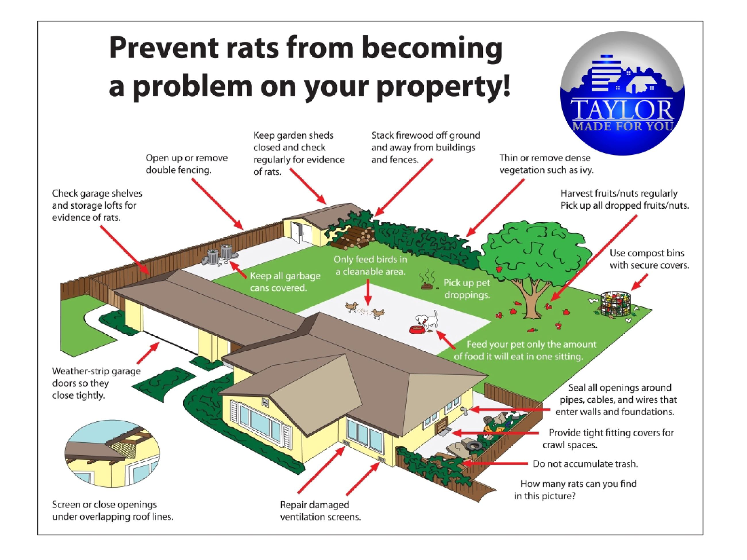 Rat Prevention in Taylor